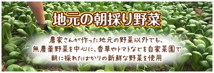 vegetables_banner